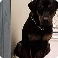 Adopt A Pet :: Herman - Spokane, WA