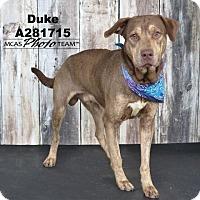 Adopt A Pet :: DUKE - Conroe, TX