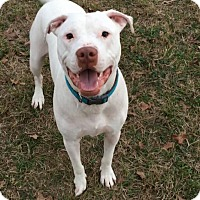 Adopt A Pet :: Marshall Mathers - College Station, TX