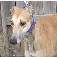 Adopt A Pet :: Zilly - Aurora, IN