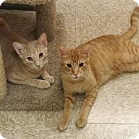 Adopt A Pet :: JASPER & SIMBA - Brea, CA