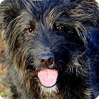 Adopt A Pet :: PONCHO(OUR