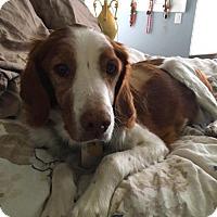 Adopt A Pet :: KS/Riley - St Louis, MO