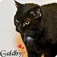 Adopt A Pet :: Galdby - River Edge, NJ