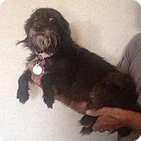 Adopt A Pet :: Annie - Orange Cove, CA