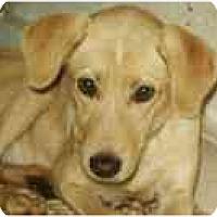 Adopt A Pet :: Laney - Cumming, GA
