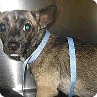 Adopt A Pet :: Ava - Long Beach, CA