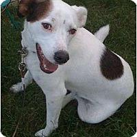 Adopt A Pet :: Anubis - Staunton, VA