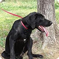 Adopt A Pet :: *Carson - PENDING - Westport, CT