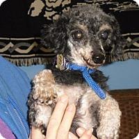Adopt A Pet :: Alester - Tulsa, OK