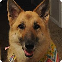Adopt A Pet :: Champagne - Houston, TX