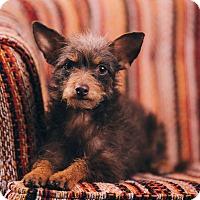 Adopt A Pet :: Roberta - Portland, OR