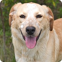 Adopt A Pet :: *Bella - PENDING - Westport, CT