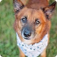 Adopt A Pet :: Rory - Kingwood, TX