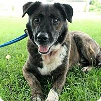 Adopt A Pet :: Fozzie - Mt. Prospect, IL