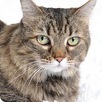 Adopt A Pet :: Tinkerball - Roseville, CA
