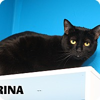 Adopt A Pet :: Farina - Oakland, NJ