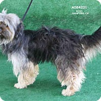 Adopt A Pet :: A084201 - Hanford, CA