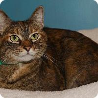Adopt A Pet :: Caroline - Cincinnati, OH