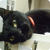 Adopt A Pet :: Luna - Hamburg, NY