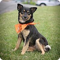 Adopt A Pet :: Lina - Enfield, CT