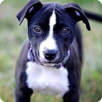 Adopt A Pet :: Nova - Elyria, OH