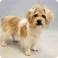 Adopt A Pet :: Zoltar - Bernardston, MA