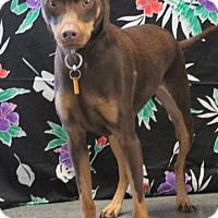 Adopt A Pet :: Twix - Tracy, CA