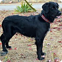 Adopt A Pet :: Destiny - Yreka, CA