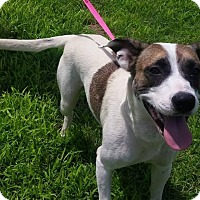 Adopt A Pet :: Opal - Pittsburg, KS