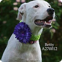Adopt A Pet :: BETTY - Conroe, TX
