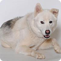 Adopt A Pet :: MADIGAN ID# A020776 @ Hesperia - Beverly Hills, CA