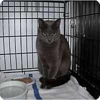 Adopt A Pet :: Sven - Syracuse, NY