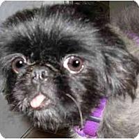Adopt A Pet :: Dulcie - Mays Landing, NJ