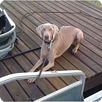 Adopt A Pet :: Lennox - Eustis, FL