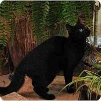 Adopt A Pet :: Keesha - Davis, CA