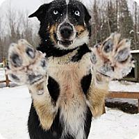 Adopt A Pet :: Sitka - Jefferson, NH
