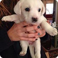 Adopt A Pet :: Casper - Mount Laurel, NJ