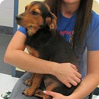 Adopt A Pet :: Gumdrop - Elmwood Park, NJ