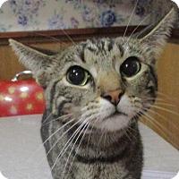 Adopt A Pet :: Princess - Witter, AR