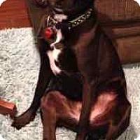 Adopt A Pet :: Gracie - San Francisco, CA