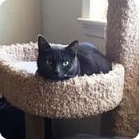 Adopt A Pet :: Cuddles - Medford, NJ
