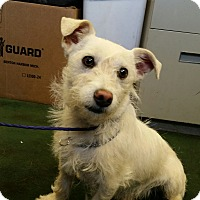 Adopt A Pet :: HANDSOME - Gustine, CA