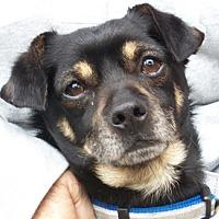 Adopt A Pet :: Geoffrey - Castro Valley, CA