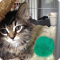 Adopt A Pet :: Turley - Los Angeles, CA
