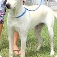 Adopt A Pet :: MINDY(WONDERFUL FAMILY PUP!! - Wakefield, RI