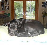 Adopt A Pet :: Raven - North Jackson, OH