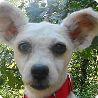 Adopt A Pet :: Hanna - St Louis, MO
