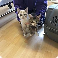 Adopt A Pet :: Oakley - Romeoville, IL