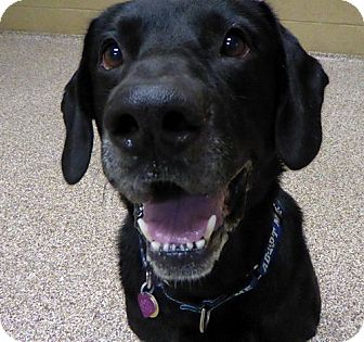 Labrador Retriever Mix Dog for adoption in Midlothian, Virginia - Sunshine #2 aka Sonny